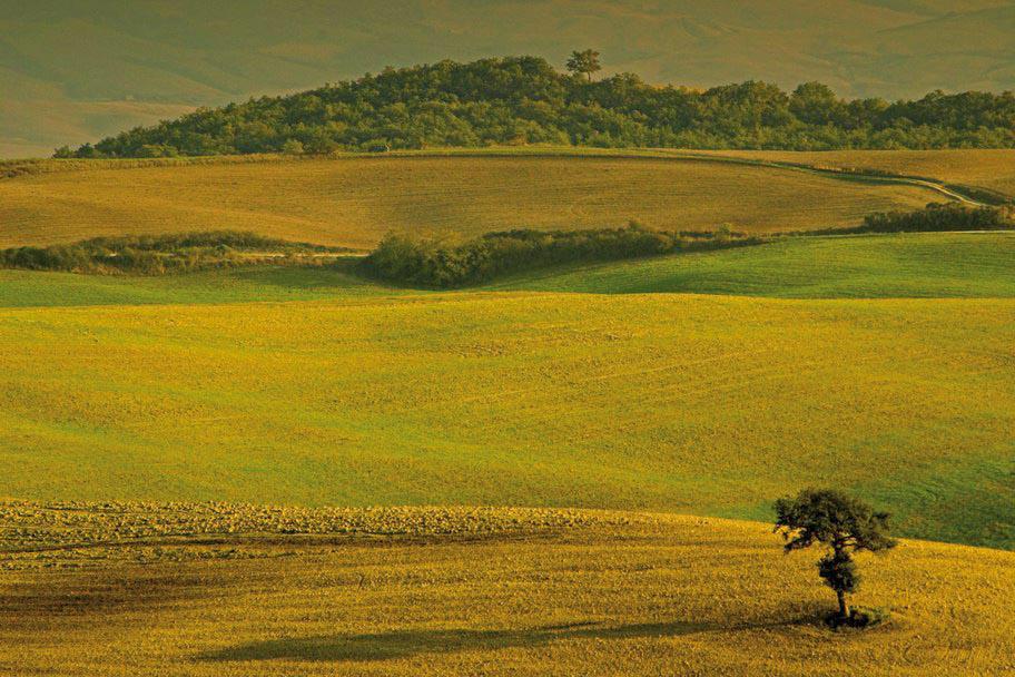 Terre di Siena DOP – Olio EVO foto-4