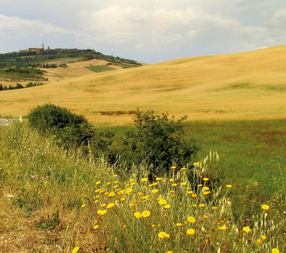 Terre di Siena DOP – Olio EVO foto-5