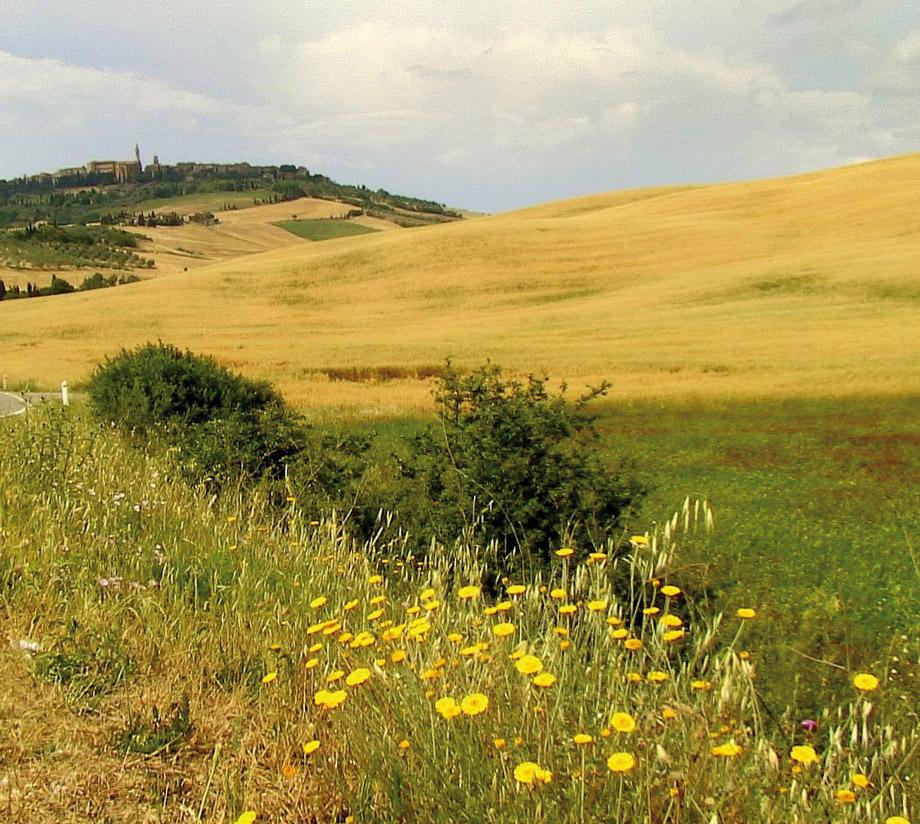 Toscano IGP – Olio EVO foto-5