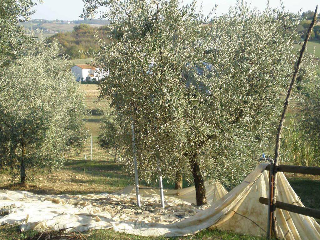 Toscano IGP – Olio EVO foto-9