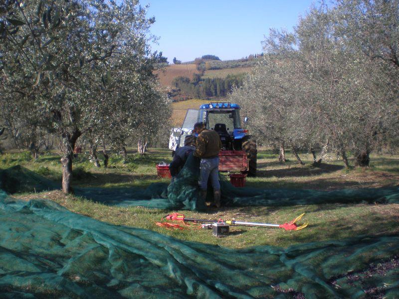 Toscano IGP – Olio EVO foto-10