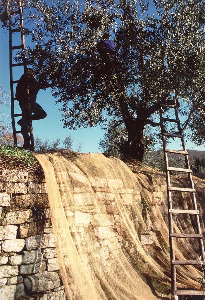 Toscano IGP – Olio EVO foto-12