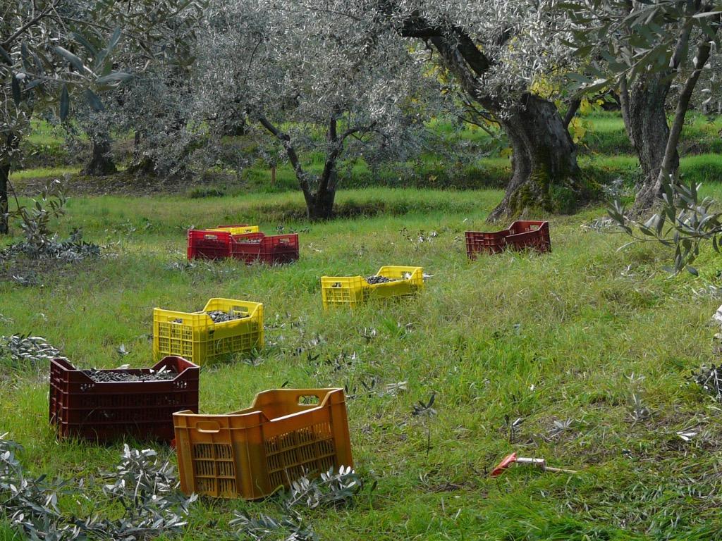 Toscano IGP – Olio EVO foto-13