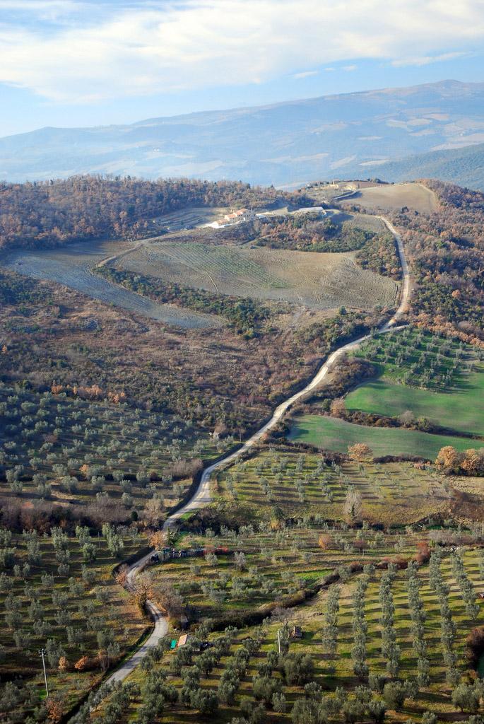 Toscano IGP – Olio EVO foto-3