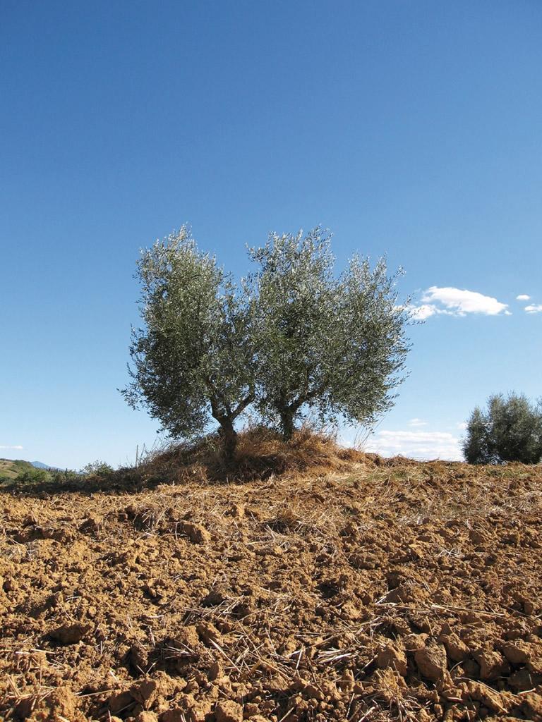 Toscano IGP – Olio EVO foto-6
