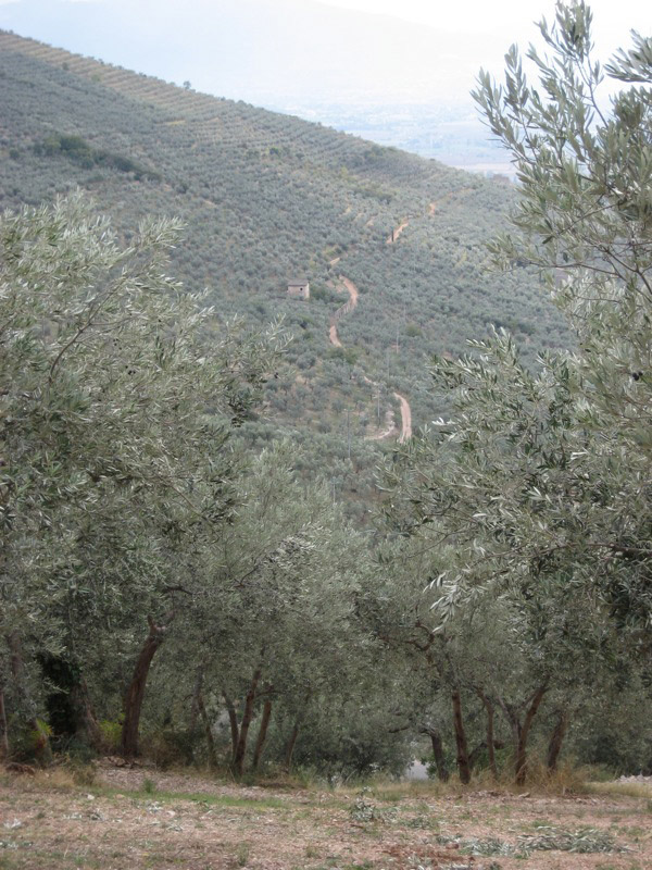 Umbria DOP – Olio EVO foto-2