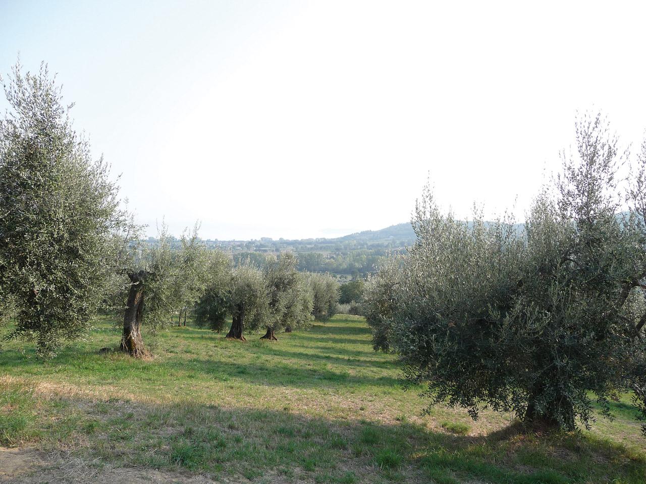 Umbria DOP – Olio EVO foto-3