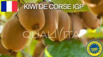 Kiwi de Corse IGP – Francia
