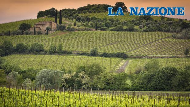 Il primato della qualità Siena resta ai vertici grazie ai suoi vini