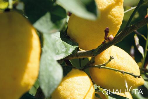 Limone di Rocca Imperiale IGP foto-1