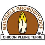 Brussels grondwitloof IGP