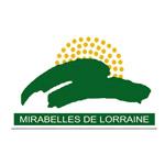Mirabelles de Lorraine IGP
