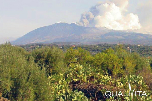 Monte Etna DOP – Olio EVO foto-1