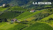 Piemonte, buona annata per il vino ma incognita vendite