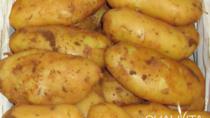 Patata Novella di Galatina DOP - Italia