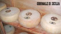 Pecorino Siciliano DOP, decolla la produzione