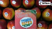 Pesche e Nettarine di Romagna IGP, disciplinare da rifare