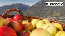 Mele DOP IGP, primato nazionale targato Trentino Alto Adige