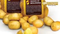 Patata di Bologna DOP,  a rischio l