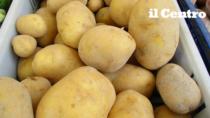 Patata del Fucino IGP, raccolta record: 290 mila quintali sui mercati