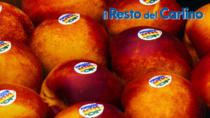 Pesca e Nettarina di Romagna IGP e Pera dell