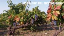 Primitivo di Manduria DOP: +12% per una produzione da 25 milioni di bottiglie