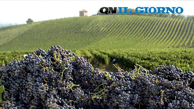 Oltrepò Pavese DOP, nasce il vino d