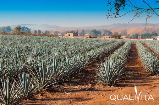 Tequila IG foto-1