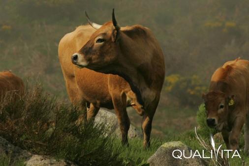 Ternera de los Pirineos Catalanes IGP foto-1