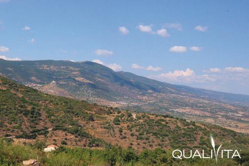Valle del Tirso IGP foto-1