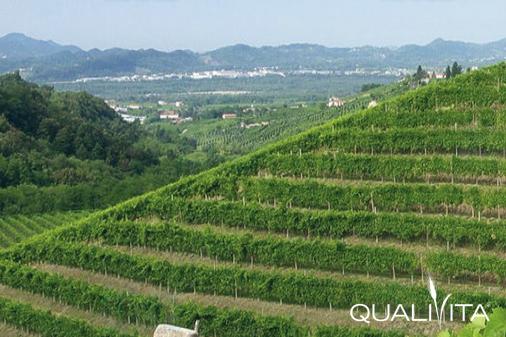 Veneto Orientale IGP foto-1