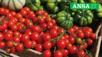 Consorzio Pomodoro di Pachino IGP, formazione e sostenibilità tra gli obiettivi 2020