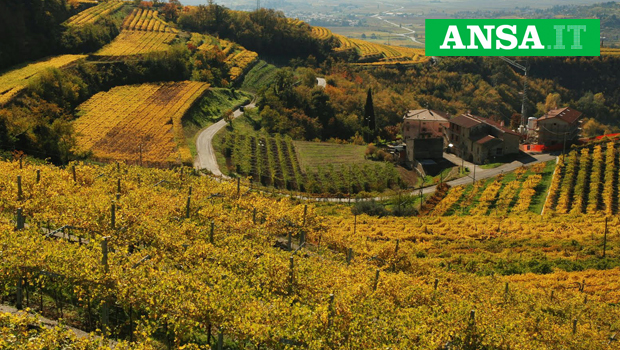 Vino: in Svizzera è passione da Valpolicella Ripasso DOP +9%