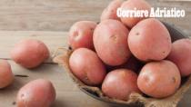 Patata Rossa di Colfiorito IGP: «Si paga la siccità»