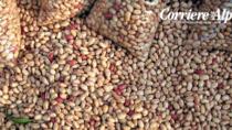 Festa del Fagiolo di Lamon IGP: 20mila presenze e 10 quintali di prodotto venduto