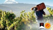 In Sicilia al via i corsi d'eccellenza per le aziende vitivinicole dell'Etna DOP
