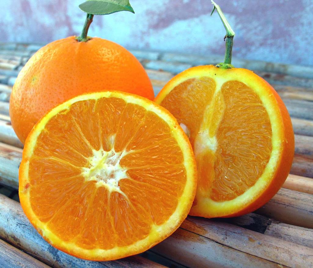 Arancia del Gargano IGP foto-5