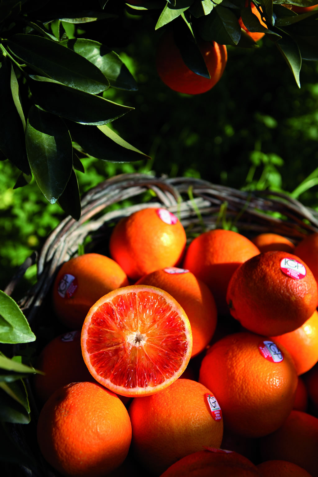 Arancia Rossa di Sicilia IGP foto-17