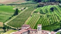 Consorzio Vini Mantovani: Bilancio produttivo positivo per i vini DOP e IGP
