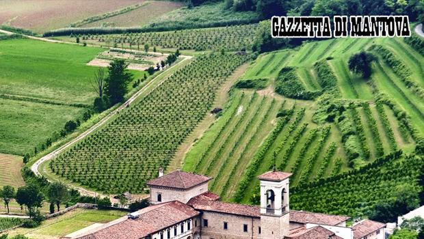 Consorzio Vini Mantovani, arriva il bilancio produttivo delle denominazioni DOP e IGP