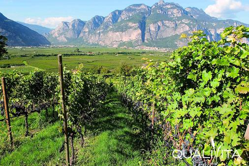Grappa del Trentino IG foto-1