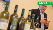 Istituto marchigiano di tutela vini: nuovo piano Ocm da 2 milioni di euro