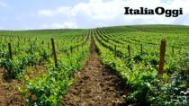 Vitigni, ancora un rinvio per la disputa dei vini siciliani