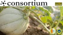 Melone Mantovano la svolta grazie al riconoscimento IGP