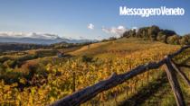 Consorzio Friuli Colli Orientali: raccolti tutti i dati della vendemmia in 2 mila ettari DOP