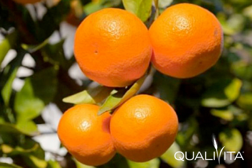 Neretvanska Mandarina DOP foto-1