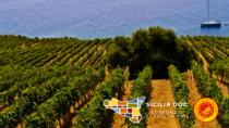 Il Consorzio Vini DOC Sicilia lancia SOStain, la Fondazione per il vino green