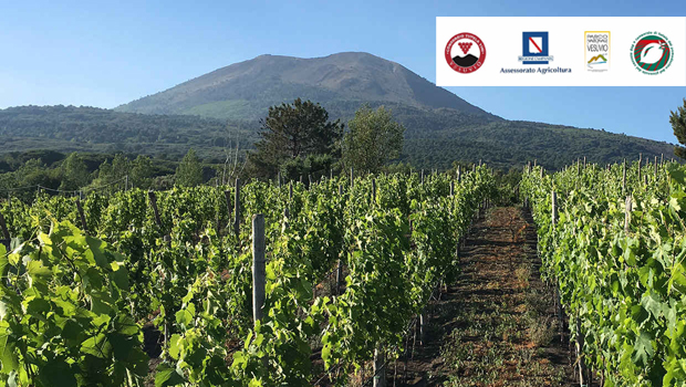 Verso la creazione del distretto agroalimentare di qualità del Vesuvio