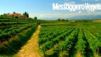 Colli Orientali del Friuli DOP: meno uva ma vini di ottima qualità