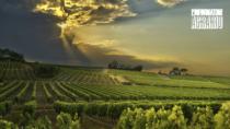 Denominazioni vini: campanello d